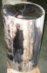 "CC312-27, Petrified Wood-With Polish, Black & Ivory, 9""x 16 1/2""H, Pricing & Availability Upon Request"