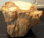 CC813-26, Petrified Wood Riser, Pricing & Availability Upon Request